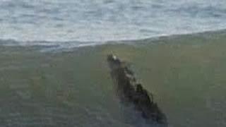 Ξεχάστε τους καρχαρίες! Τώρα μας απειλούν Κροκόδειλοι 4 μέτρων!