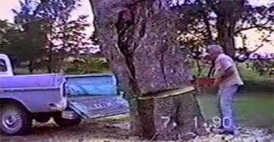 Η κοπή ενός δέντρου στην καρότσα του φάνηκε καλή ιδέα