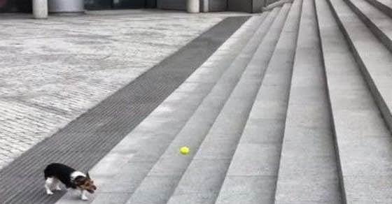 τι σκέφτηκε αυτός ο σκύλος