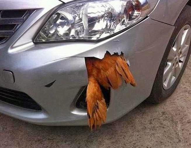 χτύπησε μια κότα