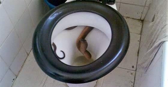 Απόλυτος τρόμος: Πήγε να καθίσει στην τουαλέτα και