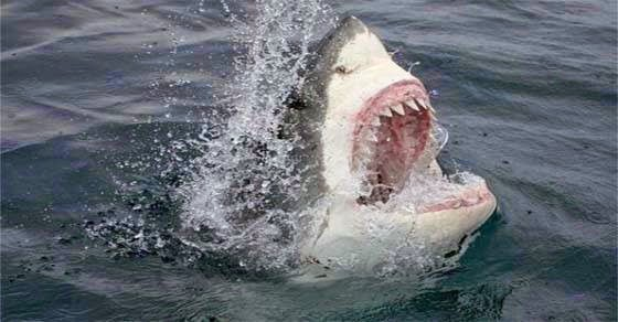 Θαλάσσιο τέρας έφαγε τεράστιο λευκό καρχαρία