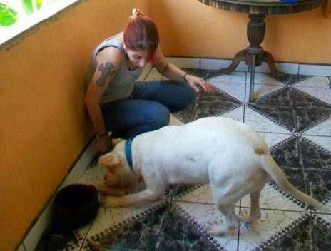 πεινασμένου αδέσποτου σκύλου…5