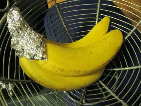 Οι μπανάνες παραμένουν έτσι φρέσκες