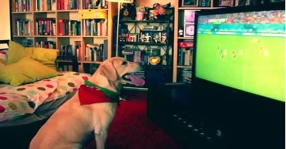 Σκύλος πανηγυρίζει το γκολ