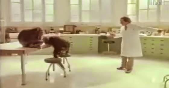 Δείτε τι θα κάνει αυτός ο χιμπατζής