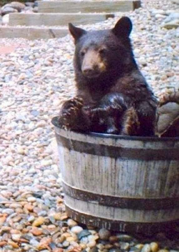 Μια αρκούδα πήγαινε εκεί1