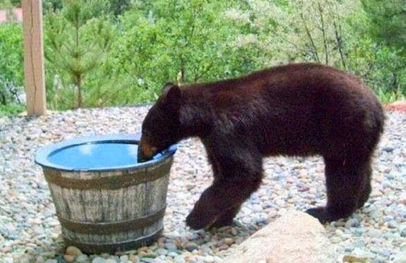 Μια αρκούδα πήγαινε εκεί