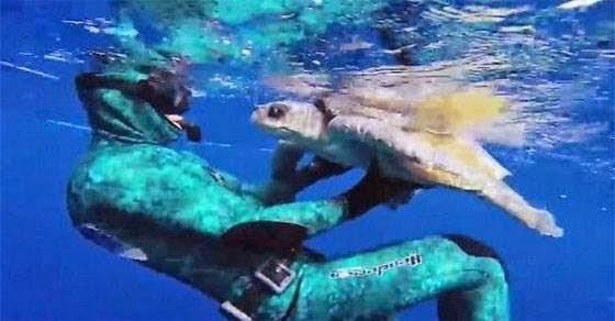 Δύτης σώζει θαλάσσια χελώνα και αυτή τον ευχαριστεί