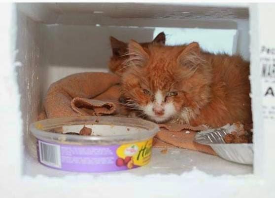 νεογέννητο γατάκι2