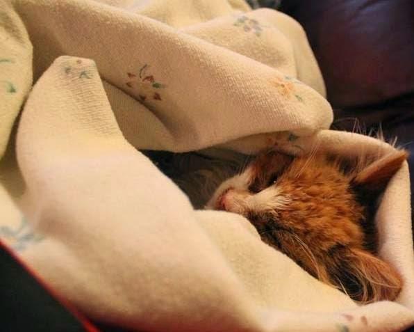 νεογέννητο γατάκι