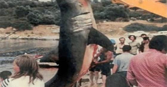Καρχαρίες σε ελληνικές θάλασσες