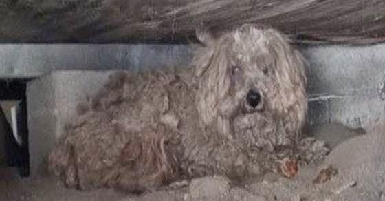 Ο ιδιοκτήτης αυτού του σκύλου πέθανε και αυτός δεν θα πιστεύετε
