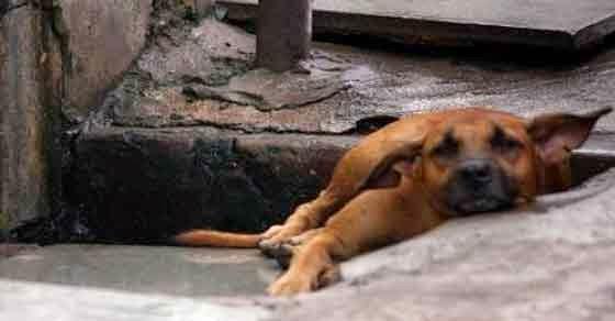 ένα αγόρι σε ένα σκυλάκι που μόλις το χτύπησε αυτοκίνητο