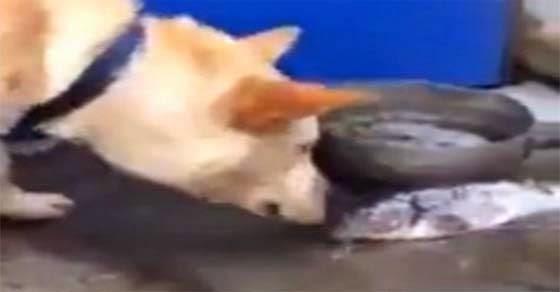 Ο σκύλος με τη χρυσή καρδιά
