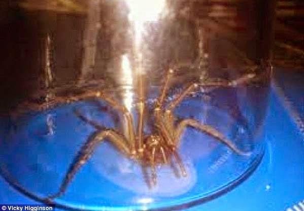 αράχνη μόλυνση