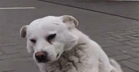 Το αδέσποτο σκυλί που θα σας ραγίσει την καρδιά