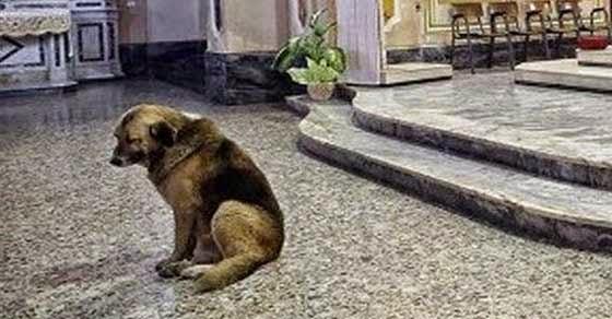 Δείτε γιατί αυτός ο σκύλος επισκέπτεται καθημερινά την Εκκλησία