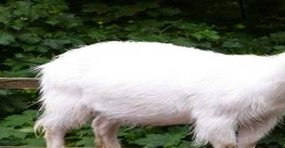 Γεννήθηκε ζώο με ανθρώπινο πρόσωπο (photos)