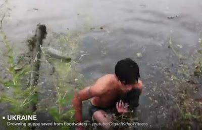 ανδρας στην Αυστραλία έσωσε κουτάβι