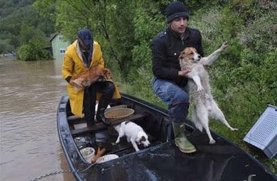 Φωτογραφίες από τη διάσωση ζώων από τις πλημμύρες στη Σερβία.1