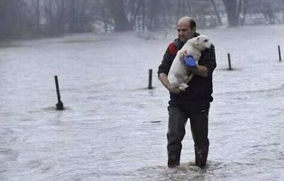 Φωτογραφίες από τη διάσωση ζώων από τις πλημμύρες στη Σερβία.3