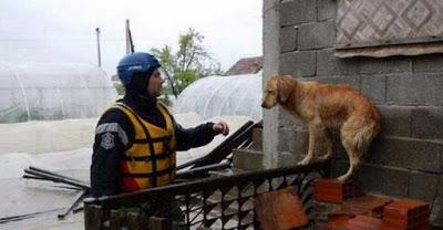 Φωτογραφίες από τη διάσωση ζώων από τις πλημμύρες στη Σερβία.4