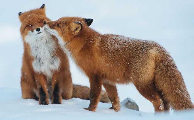 αγάπη στο ζωικό βασίλειο