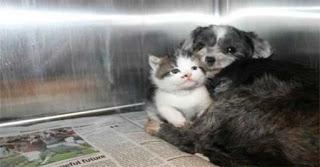σκυλίτσα πήρε υπό την προστασία της εγκαταλειμμένο γατάκι