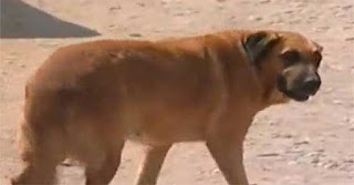 Δίχρονο κρατήθηκε στη ζωή επειδή έπινε γάλα από σκύλα