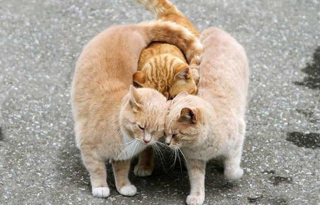 αγάπη στο ζωικό βασίλειο 1
