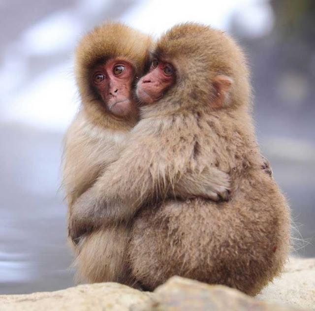 αγάπη στο ζωικό βασίλειο 2