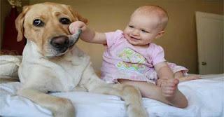 Μάθετε τι θέλει να σας πει ο σκύλος σας