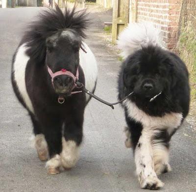 μίνι αλογάκι και σκύλος