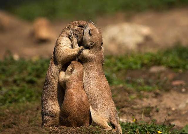 αγάπη στο ζωικό βασίλειο 4