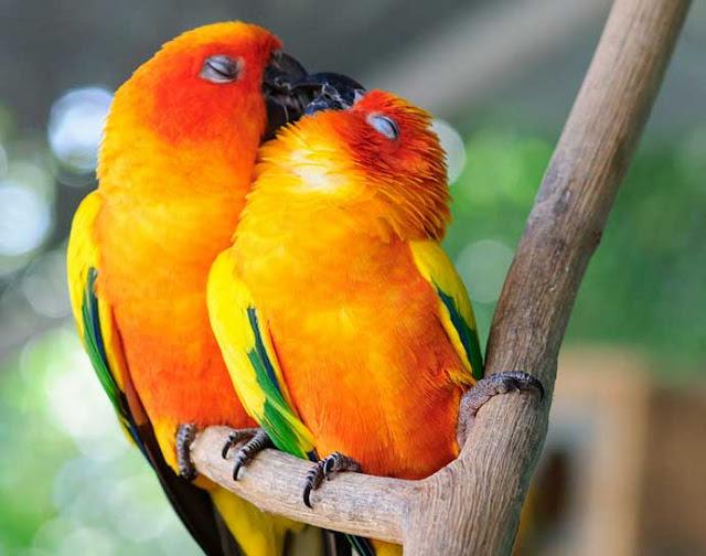 αγάπη στο ζωικό βασίλειο 5