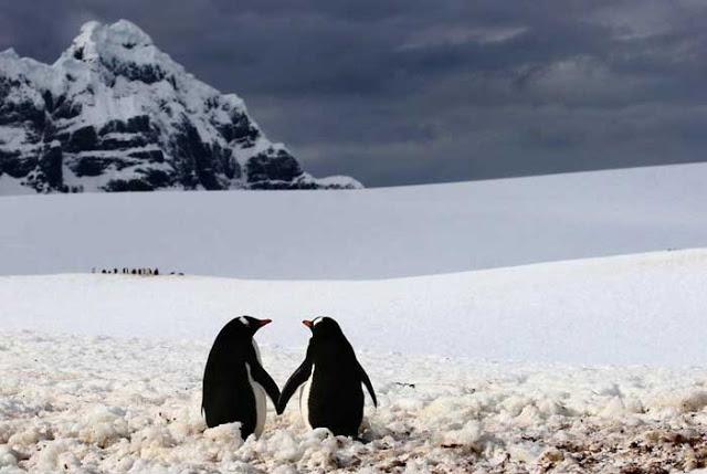αγάπη στο ζωικό βασίλειο 6