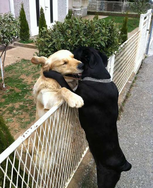 αγάπη στο ζωικό βασίλειο 8