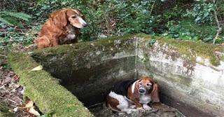 Ο σκύλος που πρόσεχε την φίλη του μέχρι να την σώσουν