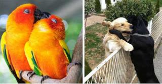 Ζευγάρια ζώων που φανερώνουν την ύπαρξη της αγάπης