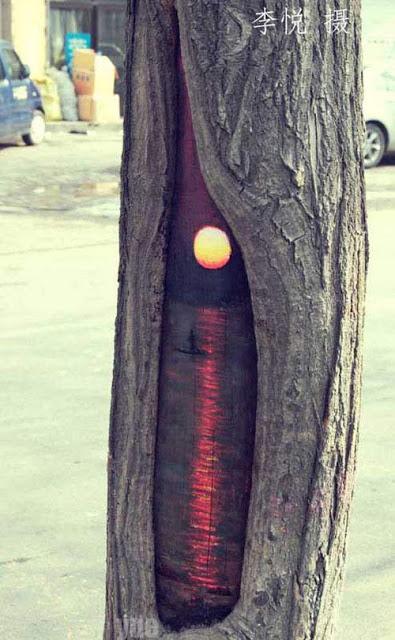 ζωγραφίζει τις τρύπες δέντρων3