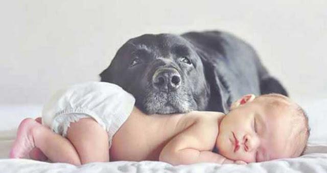 σκυλιά και βρέφη7