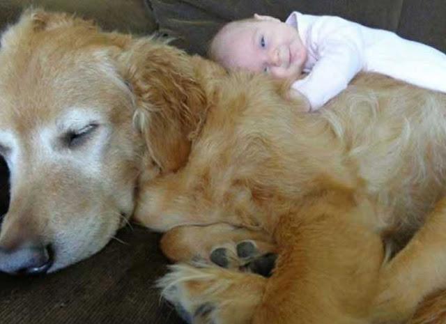 σκυλιά και βρέφη5