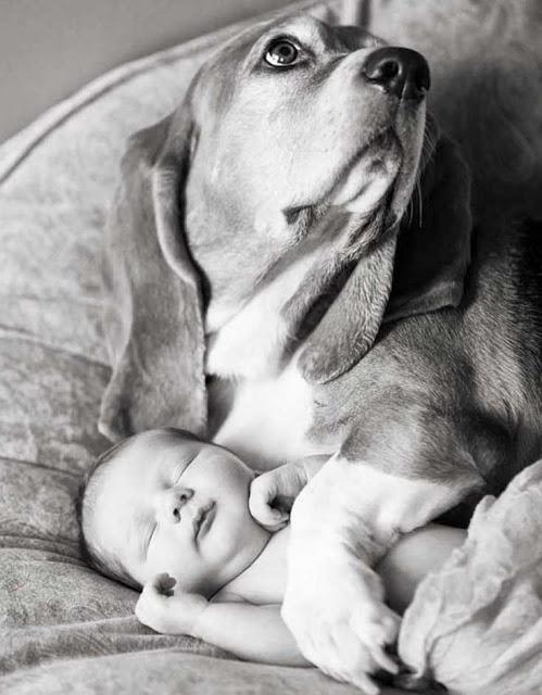 σκυλιά και βρέφη3