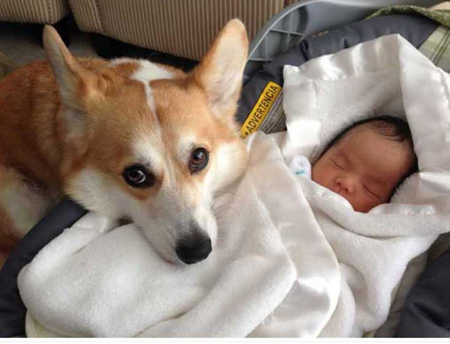 σκυλιά και βρέφη1