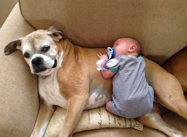 σκυλιά και βρέφη2