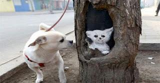 Τρύπες δέντρων πραγματικά έργα τέχνης