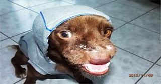 Βρετανοί υιοθέτησαν τον κακοποιημένο σκύλο από τα Χανιά