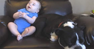 η αντίδραση του σκύλου όταν τα έκανε ο μπέμπης